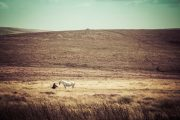 Dartmoor White Horse