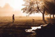 Misty Dog Walker