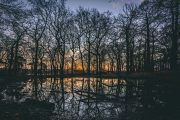 Forest Pond Sunrise
