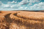 Wheat Arc